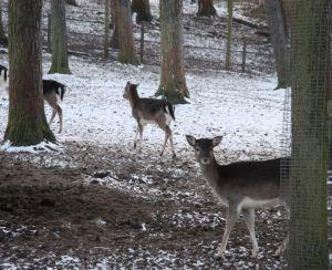Wildpark Lüneburger Heide 029
