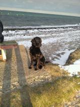 Winter-Hund