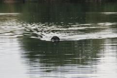 Das Monsterchen von Loch Ness