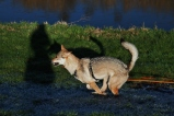 Wolf auf Schatten. LiNa©