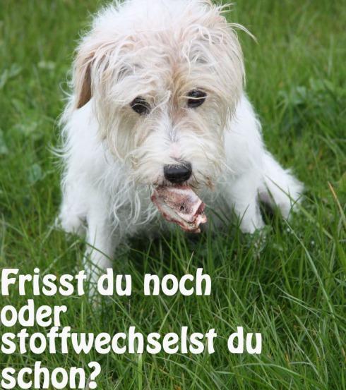 open_terrier