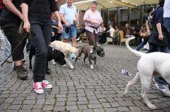 Retriever Solidarität mit den Sogenannten Kampfhunden
