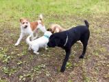 Upps...da hat sich Herr Labrador in den Zwergenaufstand geschlichen