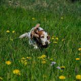 Jagdverhalten beim Hund